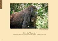 Uganda / Ruanda - Safari Uganda