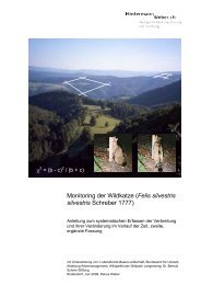 Monitoring der Wildkatze - Hintermann & Weber AG