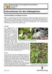 Falscher Mehltau (Plasmopara obducens) an Fleißigen Lieschen