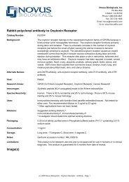 Rabbit polyclonal antibody to Oxytocin Receptor Image(s)