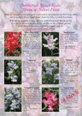View - Somerset Sweet Peas - Page 6