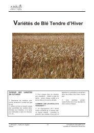 Variétés de Blé Tendre d'Hiver - Terre-net