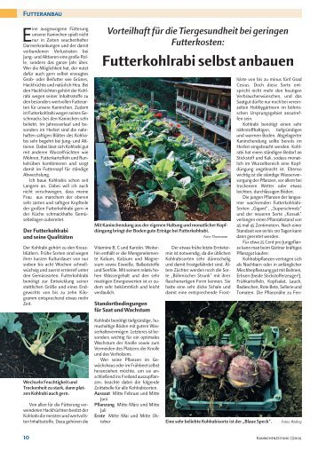 Futterkohlrabi selbst anbauen - Silberkaninchen