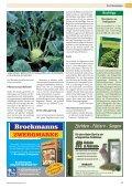 Futterkohlrabi selbst anbauen - Silberkaninchen - Seite 2