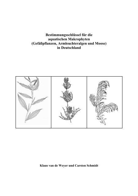 gr/ün Sparganium erectum /Ästiger-//Aufrechter- Igelkolben Wasserpflanzen Wolff