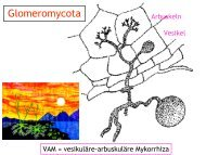 Pilze - Ascomycota - PharmXplorer