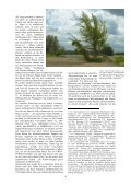 """""""Endlich so ist auch der Pappel-Baum zu betrachten …"""" - wolfslight.de - Seite 4"""