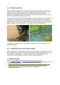 'Fiche exotenbestrijding: Japanse duizendknoop' (ANB, 2009, pdf ... - Page 4