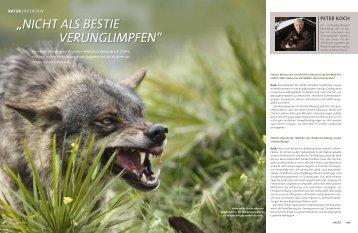 """der DWV im Magazin HALALI 1-2013 - Inteview zum Thema """"WOLF"""""""