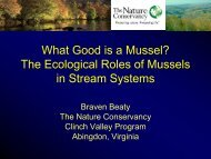 The Ecological Roles of Mussels in Stream Systems