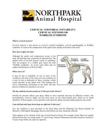 Cervical Spondylomyelopathy Wobbler Syndrome In Dogs
