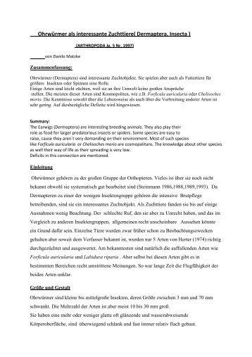 Ohrwürmer als interessante Zuchttiere( Dermaptera, Insecta ) - FMart