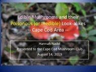 Mushroom_Look_alikes_on_Cape_Cod_-Hannah_Nadel.pdf 2.4 MB