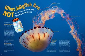 "to download a pdf of ""What Jellyfish Are Not."""