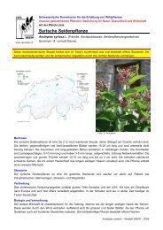 Syrische Seidenpflanze - Schweizerische Kommission für die ...