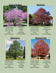 2013 Preorder Flyer - Athens Trees
