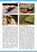 Biotope hinter Glas - Aquarien- und Terrarienverein im ... - Seite 7
