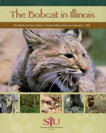 The Bobcat in Illinois - DNR