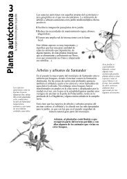 3. Planta autóctona,la mejor elección para tu jardín [Descargar]