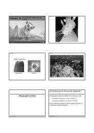 Ch. 16 Prokaryotes and Protists