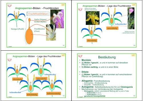 Biologie f. Pharmazeuten - PharmXplorer