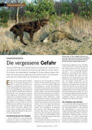Aujeszky'sche Krankheit - Wald und Holz NRW