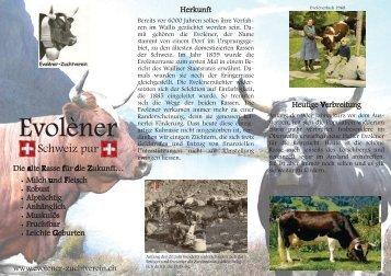 Rasse Evolène - Swissherdbook