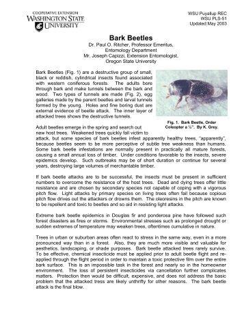 PLS 51 Bark Beetles