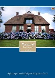 Hydrangea macrophylla Magical®-Serie
