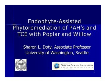 Endophyte-assisted phytoremediation of PAHs and TCE with