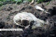 Boswandeling langs de dood - Agentschap voor Natuur en Bos