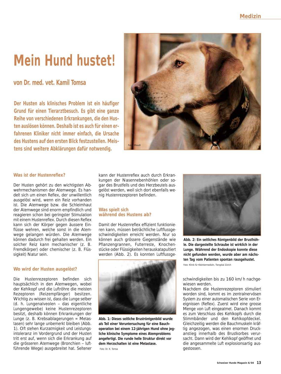 Beste Hunde Reproduktive Anatomie Zeitgenössisch - Menschliche ...