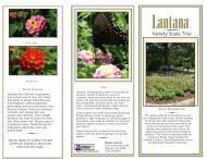 VARIETY STUDY - Rowan Master Gardener