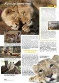 Als Helfer unter Löwen - Seite 3