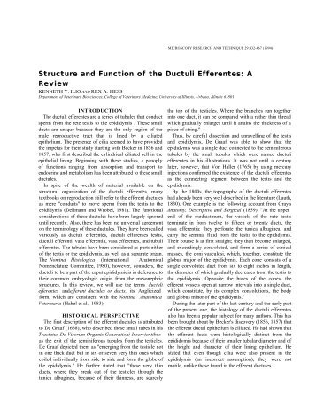 Structure and Function of the Ductuli Efferentes - University of Illinois ...