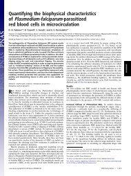 of Plasmodium-falciparum-parasitized - Center for Fluid Mechanics ...