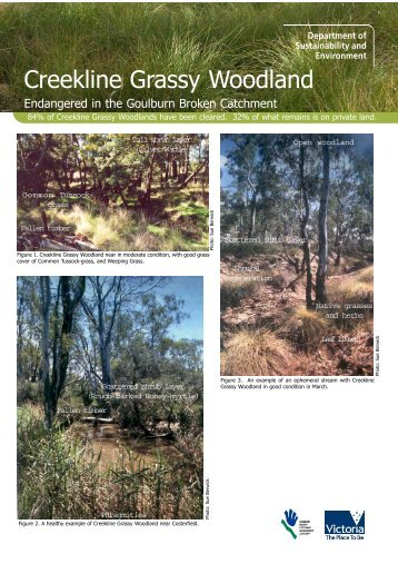 Why Creekline Grassy Woodlands are Threatened - Goulburn ...
