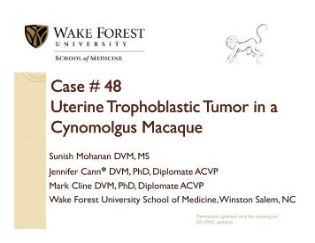 Case # 48 Uterine Trophoblastic Tumor in a Cynomolgus ...