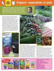 Organic vegetables in pots - Searles