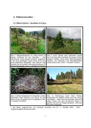 Fotoanhang Monitoring Vögel - Hotzenwald LIFE