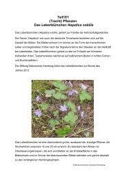 Teil101 (Tracht) Pflanzen Das Leberblümchen Hepatica nobilis