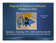 Diagnosis and treatment of behaviour problems in dogs