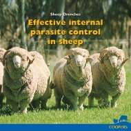 Effective internal parasite control in sheep - Coopers Animal Health
