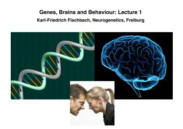Genes, Brains and Behaviour: Lecture 1 - Fischbach Drosophila lab