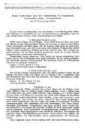 Neue Lamiinae aus der Sammlung F. Tippmann - Cerambycoidea ...