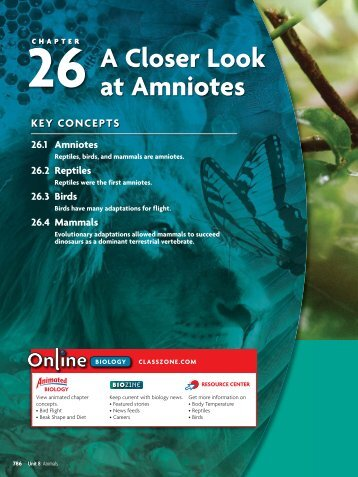 26 A Closer Look at Amniotes