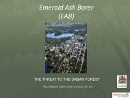May 24th Presentation: The Emerald Ash Borer - Sustainable ...