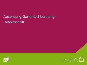 Kahlfüßige Sträucher mit Basisförderung - Neuenkirchen Melle im ...