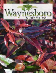 Wholesale Catalog - Waynesboro Nurseries, Inc.