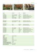Limousin : rassige Tiere mit entwickeltem Skelett und gutem ... - AWE - Page 2